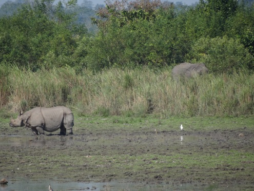 One Horned Rhinoceros and Elephant