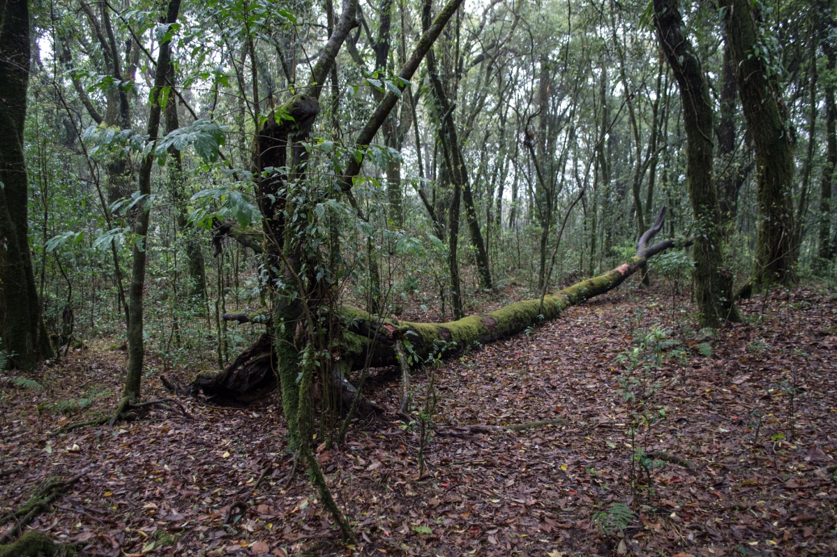 Mawphlang Sacred Forest – A PhotoStory