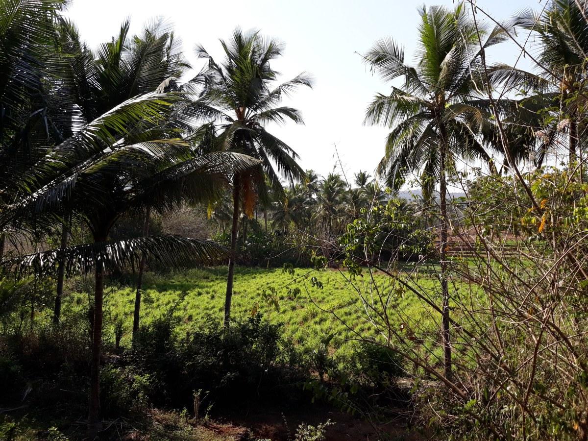 Shigmotsav of Goa – Celebrating Life andLand