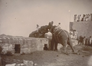 12-Elephant fight,Udaipur, 1885 CE, Collection & Copyrigh- British Library