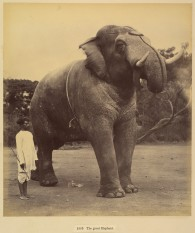 18-The Great elephant, sardhana, 1880-90, Metropolitan Museum of Art
