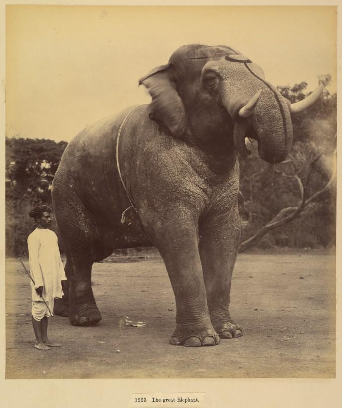 18-The Great elephant, sardhana, 1880-90, Metropolitan Museum of Art