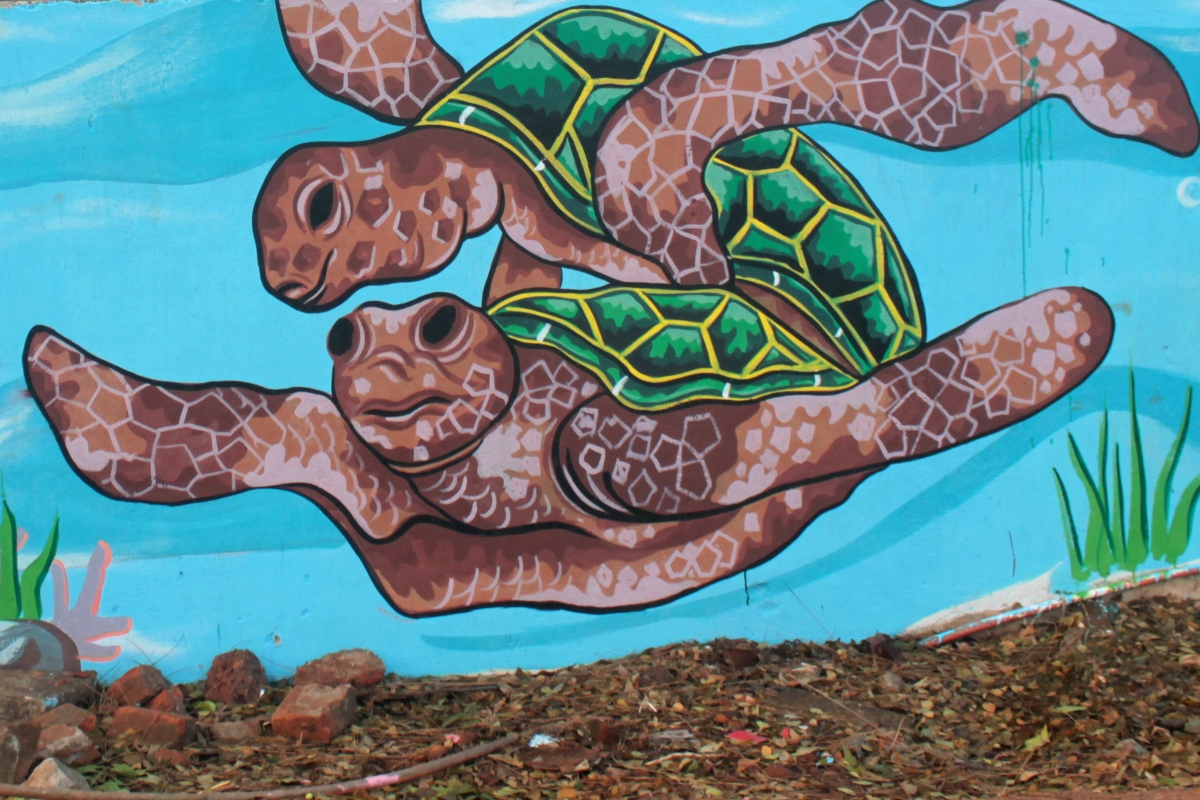 Olive Ridley Sea Turtle in Bhubaneswar's Walls – A Visual Treat